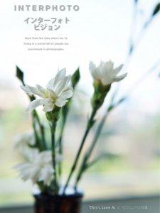 花儿带给我们生活的美好回忆