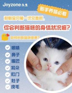 养猫必看|初次见面如何判断猫咪健康状态?