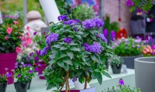 种草看花 香气逼人竟比上千的香水还好使 养护简单2招搞定