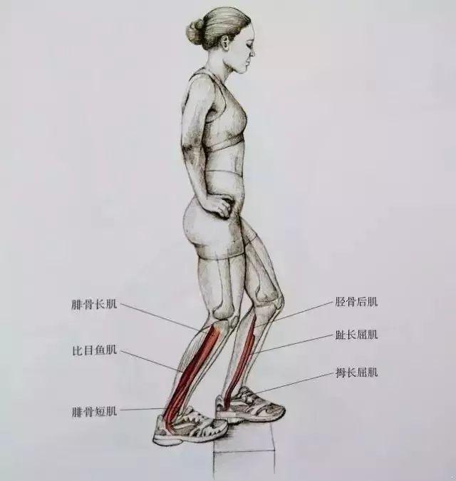 瘦小腿.jpg
