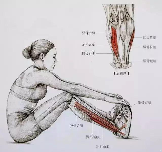 瘦小腿1.jpg