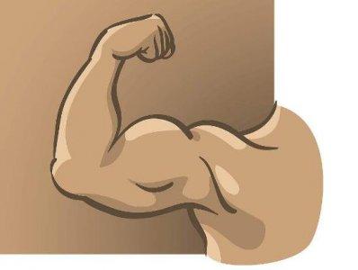 提到手臂上的肱二头肌 二头肌最有效锻炼方法