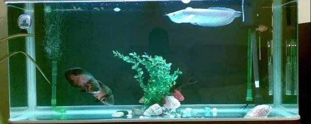 鱼缸水发酸怎么解决