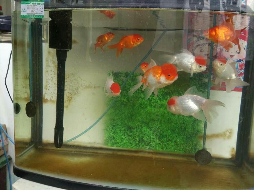 鱼缸水发黄的解决办法