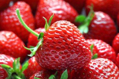 草莓的功效和作用 五个吃草莓的营养价值和好处