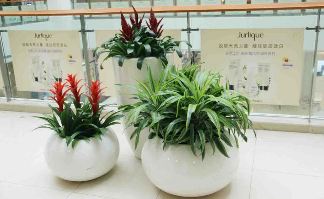 办公室适合养什么植物