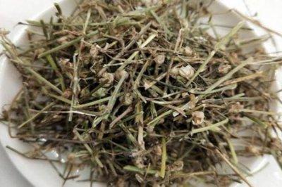 白花蛇舌草的功效与作用?四个白花蛇舌草的药用功效