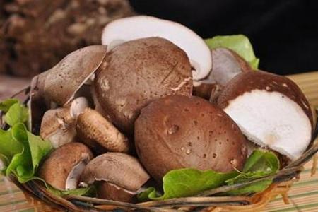 减肥香菇可以吃吗?❓❓