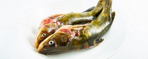 黄颡鱼不适合什么人吃