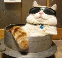 红遍岛国的猫叔是什么品种的猫