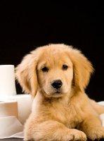 怎样让狗狗安静下来?五种办法可供选择