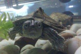 冬天如此养乌龟才算是对龟好