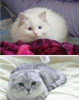 养什么猫比较好 田园猫最好养