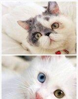 波斯猫多少钱一只 波斯猫的饲养