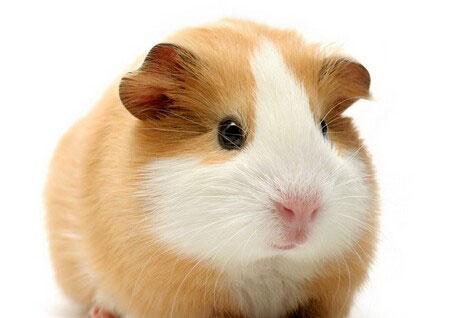 仓鼠怎么养?❓❓