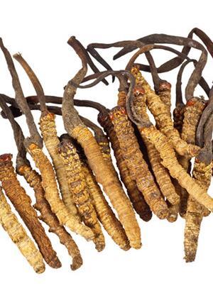 冬虫夏草怎么做好吃 冬虫夏草的做法大全