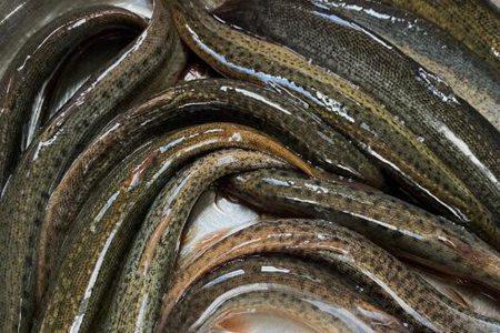 泥鳅怎么做好吃?❓❓