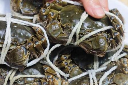 螃蟹怎么吃?❓❓