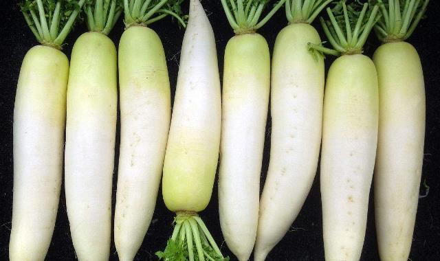 白萝卜十天减肥20斤 这个方法靠谱吗