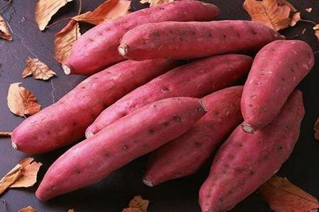 女性常吃红薯能减肥瘦身 坚持一周能瘦10斤
