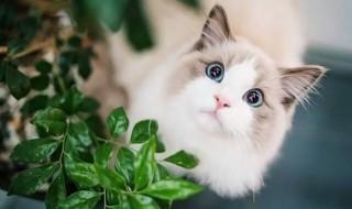 被猫咬伤最迟多久打针 你知道吗