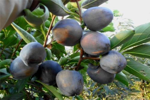 中国最贵的水果20种 高档水果排行榜