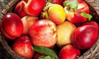 孕妇能够吃油桃吗 能够吃油桃