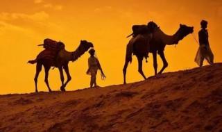 骆驼的驼峰是储存什么的 你知道吗