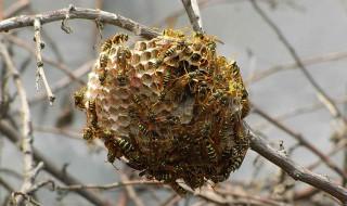 怎么找蜂窝非常简单 你应该这样做
