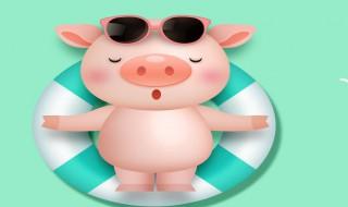 小猪保健方法 小猪保健方法列述