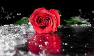 玫瑰花束保湿方法 玫瑰花束如何保鲜