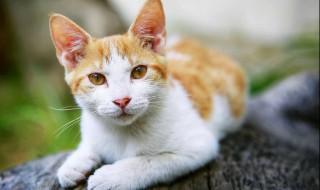 洗猫袋怎么用 洗猫袋如何用