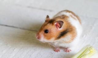 怎么防止仓鼠吃宝宝 防止仓鼠吃宝宝的技巧