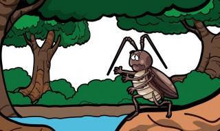蟑螂的危害及消灭方法 关于蟑螂的危害及消灭方法介绍