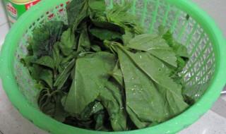 冬葵菜的做法 冬葵菜怎么做