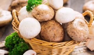 蘑菇怎么烧 烧蘑菇的方法