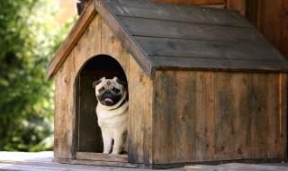 初学者养狗选什么狗狗 初学者养狗合适养什么