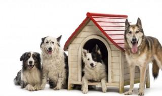 狗狗怎么养 狗狗不同时期怎么养