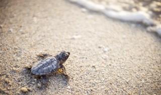 养乌龟怎么养 养乌龟如何养