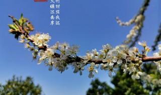 感受春天的气息的句子 感受春天的气息的优美句子精选
