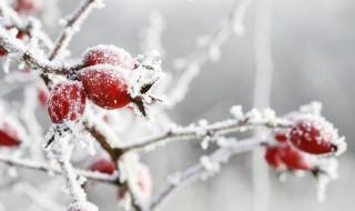 立冬节气推荐语 二十四节气之关于立冬的谚语大全