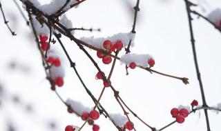 小雪节气推荐语 小雪节气有哪些推荐语