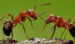 卫生间有蚂蚁怎么根除 卫生间有蚂蚁如何根除